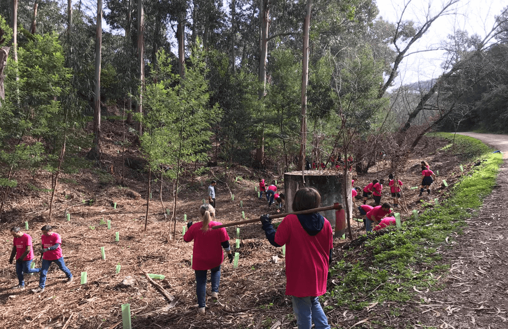Planting trees in the Natural Park of Sintra Cascais (Portugal)